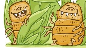 Alles im grünen Bereich: Die Herbstmilbe ist schlimmer als jede Stechmücke