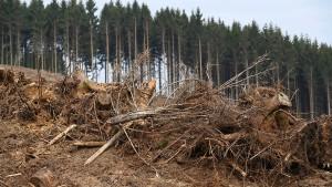 Mäuse gefährden junge Bäume in Hessens Wäldern