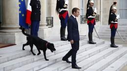 Vierbeiniger Mitbewohner für Macron