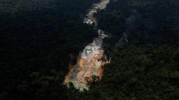 Kahlschlag im Regenwald