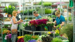 Hängende Köpfe bei Blumenhändlern