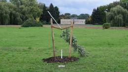 Gedenkbaum für NSU-Mordopfer in Zwickau abgesägt