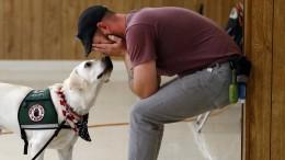 Ein Hund als Helfer gegen das Kriegstrauma