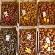 Vielfältig: Von der Kartoffel gibt es zahllose Sorten. Ein Landwirt in Niedersachsen bietet eine kleine Auswahl an.