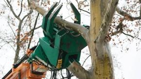 Baumfällung - Eine Platane wird in Worms unter schwierigen Bedingungen mit einem neuartigen Fällkran des Unternehmen MB Baumdienste aus dem hessischen Eppstein gefällt. Der Kran ist trotz seiner Grösse und seines Gewichts besonders wendig.