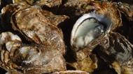 Superteuer, eiskalt, schleimig und salzig: Für viele Menschen sind Austern trotzdem das Größte.