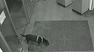 Polizei fahndet nach Hund