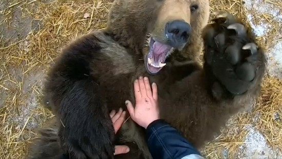 Warum russische Piloten einen Bären als Haustier halten