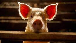 Säugetiere nehmen im Notfall Sauerstoff über Darm auf
