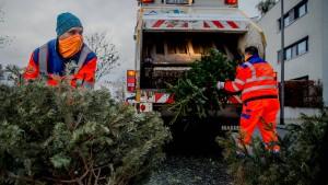 So viele Weihnachtsbäume gab es noch nie