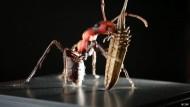 Riesige Insektenmodelle von Julia Stoess