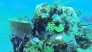Meeresschildkröten auf St. Lucia sollen überleben