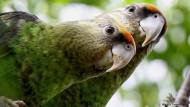 Knapper Lebensraum für den Kap-Papagei