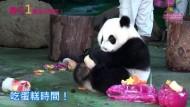 Panda feiert ersten Geburtstag