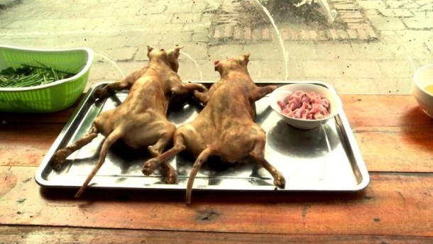 Vietnam: Katze Gekocht, Frittiert Oder Gebraten