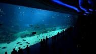 Weltgrößtes Aquarium auf Insel Hengqin in China