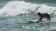 Hunde als Surf-Champions