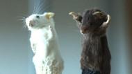Tote Tiere als teure Kunstobjekte