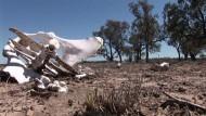 Trockenheit treibt Australiens Viehzüchter in die Verzweiflung
