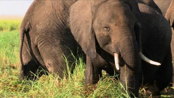 Zurück zur Elefanten-Jagd?