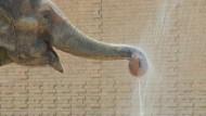 Dusche für Elefanten