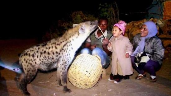 Raubtiere fressen Touristen aus Hand und Mund