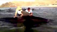 24 Grindwale an der Küste Mexikos verendet
