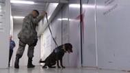 Mit Hunden gegen die Terrorgefahr bei EM und Olympia