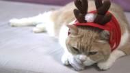 Das versteckte Leben der Schaufenster-Katzen