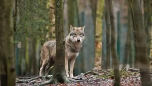 Warum es Streit über wilde Tiere gibt