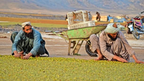 """""""Wir brauchen bis zu 300 Milliarden Dollar jährlich für die Kleinbauern"""""""