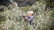 Viele Griechen besitzen noch ein paar Olivenbäume auf dem Land – und werden in Zeiten der Not wieder zu nebenberuflichen Olivenbauern.