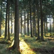 """""""Wodurch unterscheidet sich aber unsere Freiheitsgeschichte von der Freiheitsgeschichte des Ebers, wenn sie nur in den Wäldern zu finden ist?"""" So fragte, schon vor 175 Jahren, Karl Marx."""