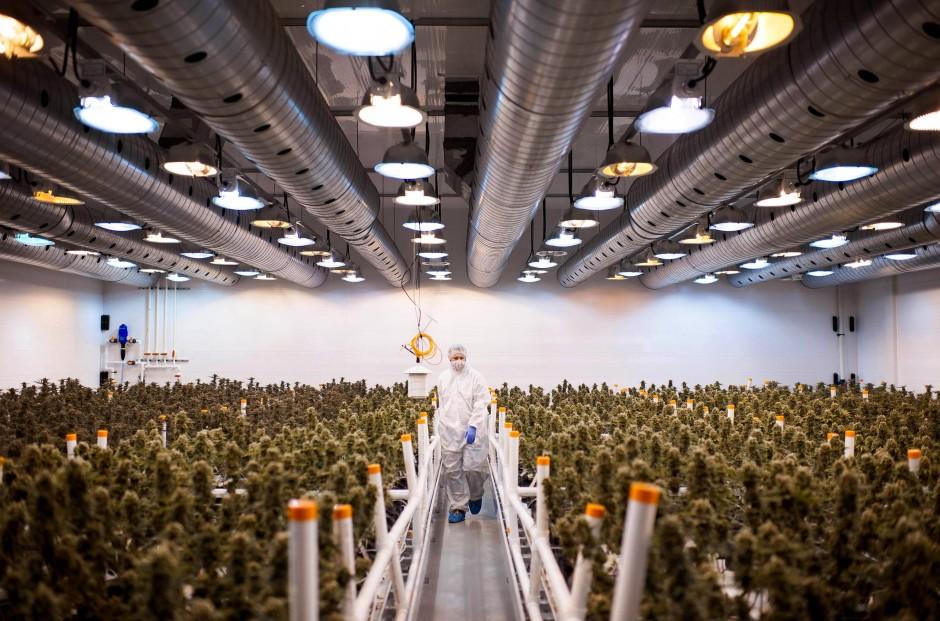 Ein Gewächshaus für Marihuana in Kanada