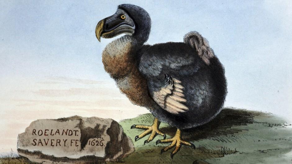 Der Dodo weiß: Der Anthropozentrismus ist unüberwindbar. Aber das heißt nicht, dass er nicht anpassungsfähig wäre.