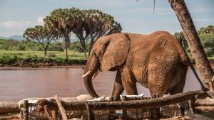 Im Land der Kuschelkobras und Schmuseelefanten
