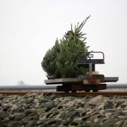Zwischen Flut und Flut: Weihnachtsbäume auf dem Weg zur Hallig Nordstrandischmoor