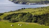 Grundschulkinder wollen nach Irland trampen