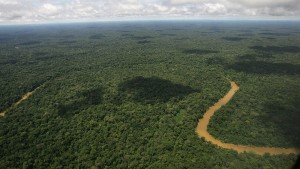 Wird der Regenwald als Klimaretter überschätzt?
