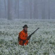 Um halb zehn Uhr morgens sind alle zweiundsiebzig Schützen im Revier verteilt. In ihren orangen Jacken sitzen sie in Einsamkeit und Kälte.