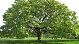 Wissenschaft als Beruf vor dem Trompetenbaum