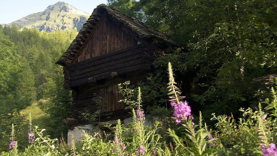 Ähnlich wie andere Randregionen in der Schweiz ist das Locarnese vom Aussterben bedroht.