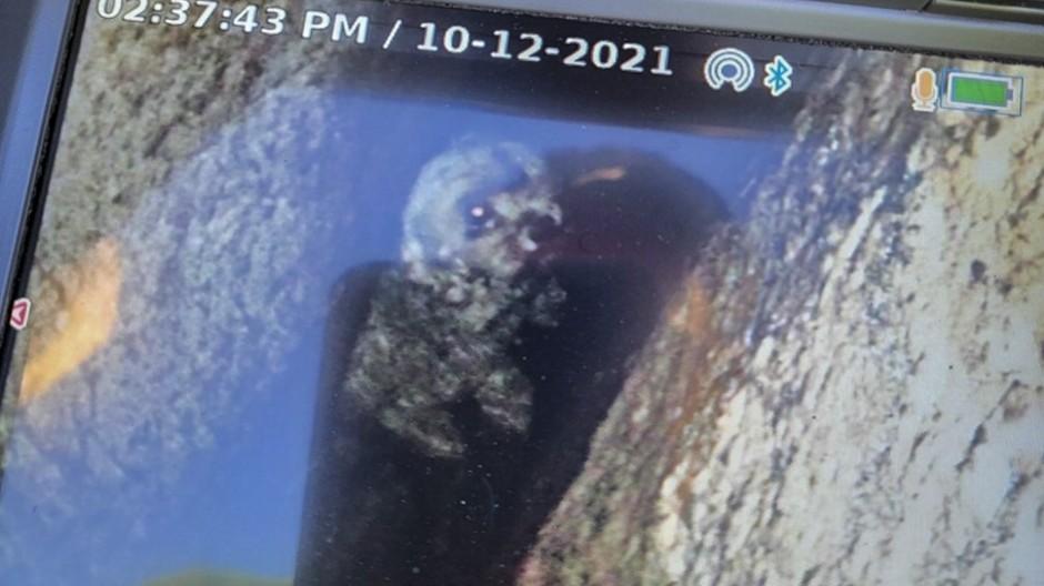 Das Tier war am vergangenen Donnerstag bei einer Wanderung mit ihrer Halterin durch das Landschaftsschutzgebiet in die fast 15 Meter tiefe Felsspalte gerutscht.