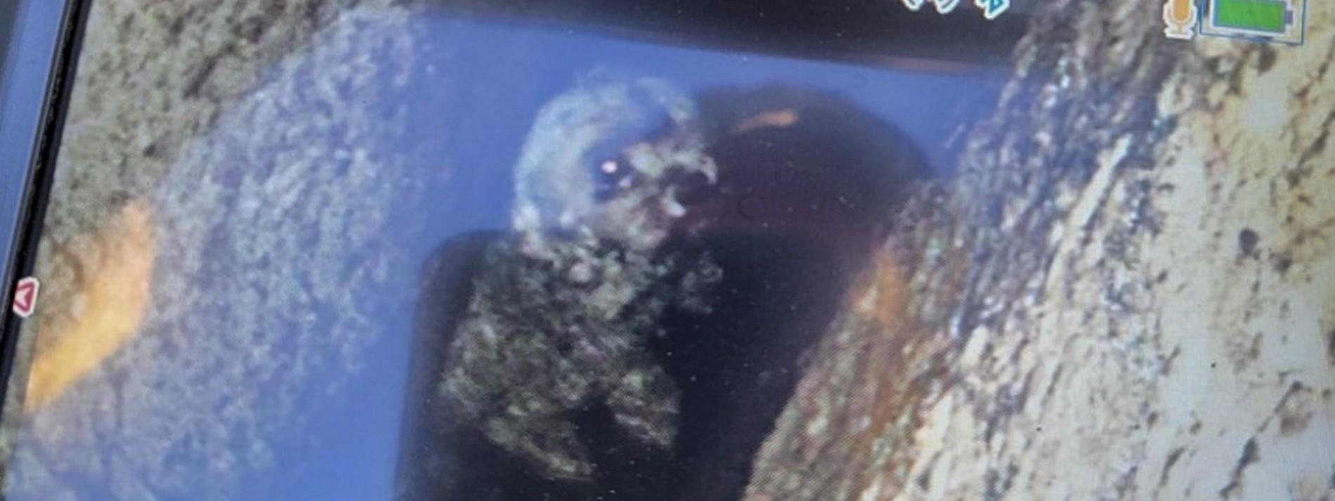 Hund nach fünf Tagen in einer Felsspalte gerettet