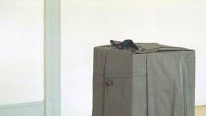 Erwin Wurm: Skulptur ist, wenn Sockel Mäntel tragen