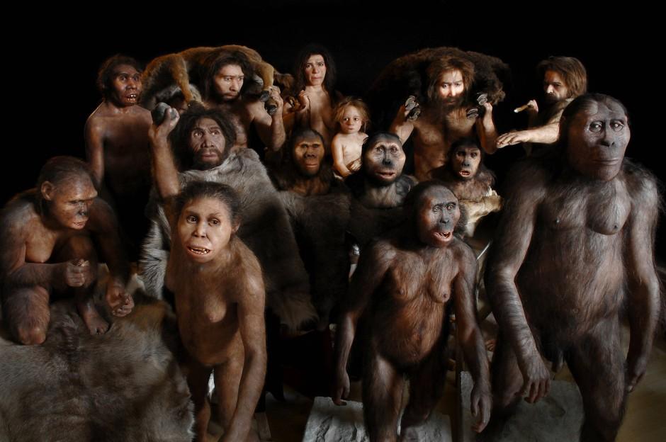 Anthropologische Modelle zu Entwicklungsstadien der menschlichen Evolution. Rekonstruktionen von Elisabeth Daynes