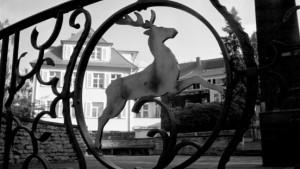 Zeitverschiebung: Uwe Tellkamps Dresden