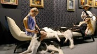 Die Damen schauspielern, aber die Hunde sind echt: Szenische Einlage auf der Moskauer Millionärsmesse