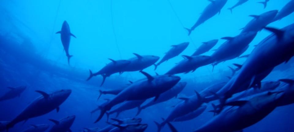 Alle Fische im Meer datieren Website