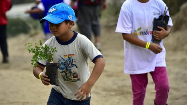 Hunderttausende Bäume an einem Tag gepflanzt
